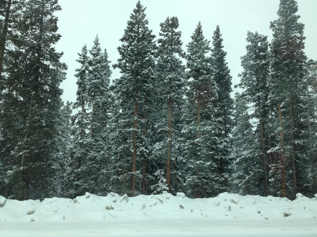 Global Warming Felt in Colorado