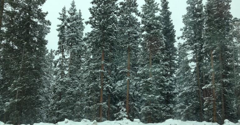 Rise in Global Temperatures Felt in Colorado