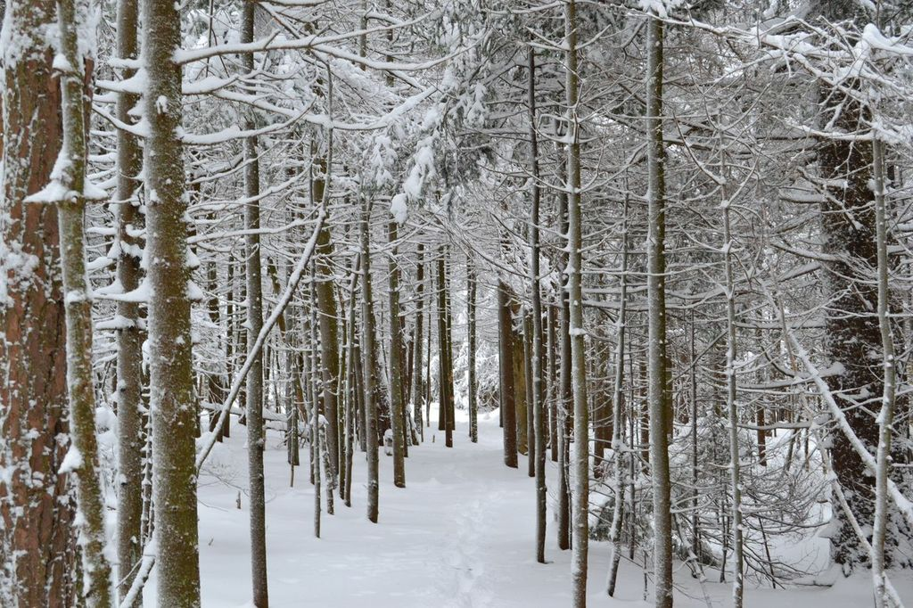 Winter Forest shot