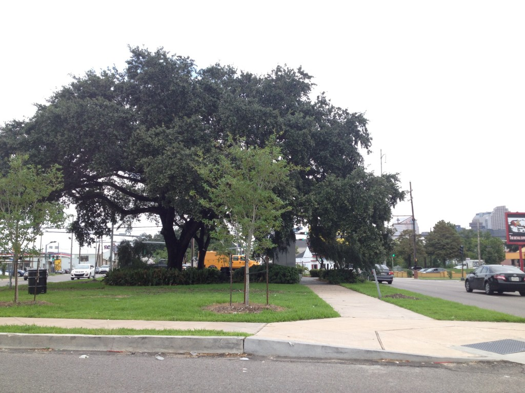 Vegetated yet elevated neutral ground, new orleans, louisiana