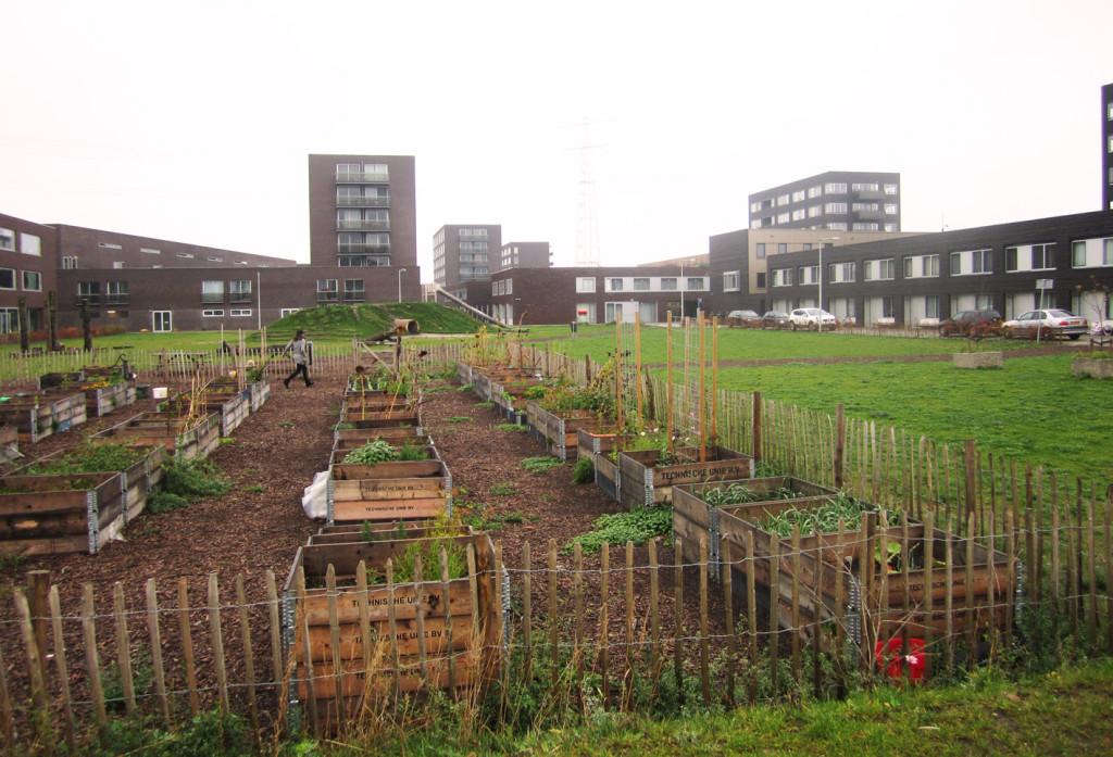 Community garden, IJburg, Netherlands