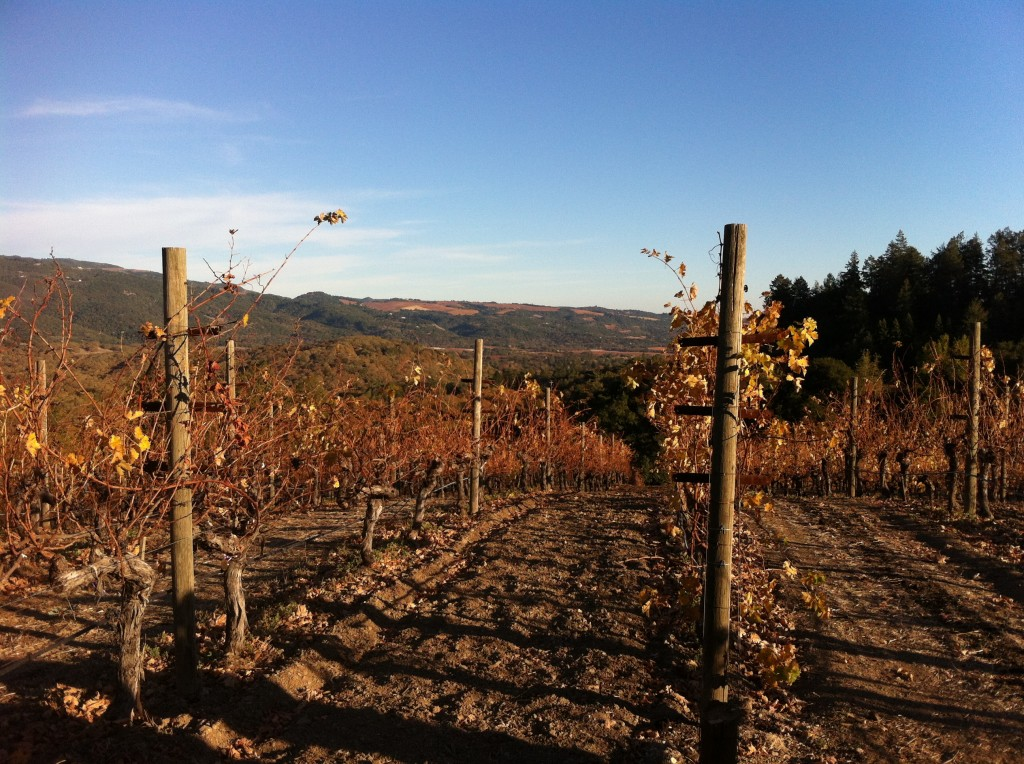 Looking southeast from atop Benziger Estate Winery