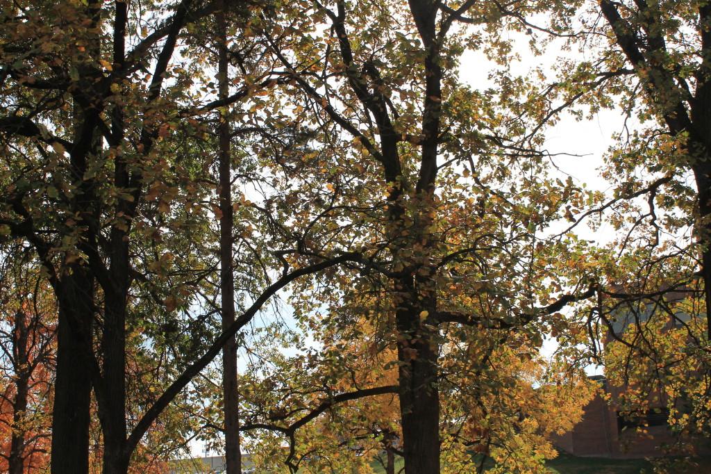 Foliage in Kansas City