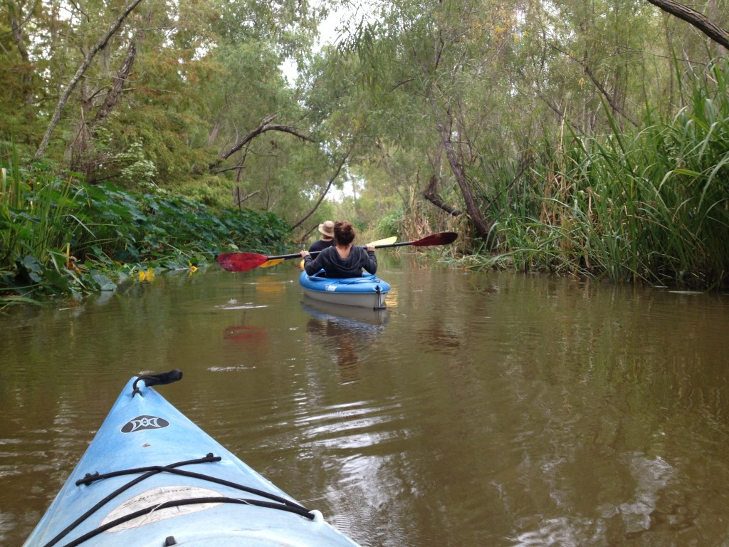 Wild Louisiana Kayak tour on Pearl River, New Orleans