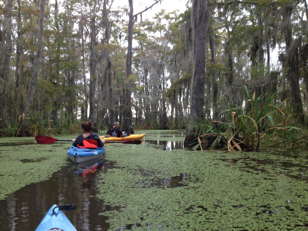 Alligator Alley just off Pearl River, New Orleans, Louisiana