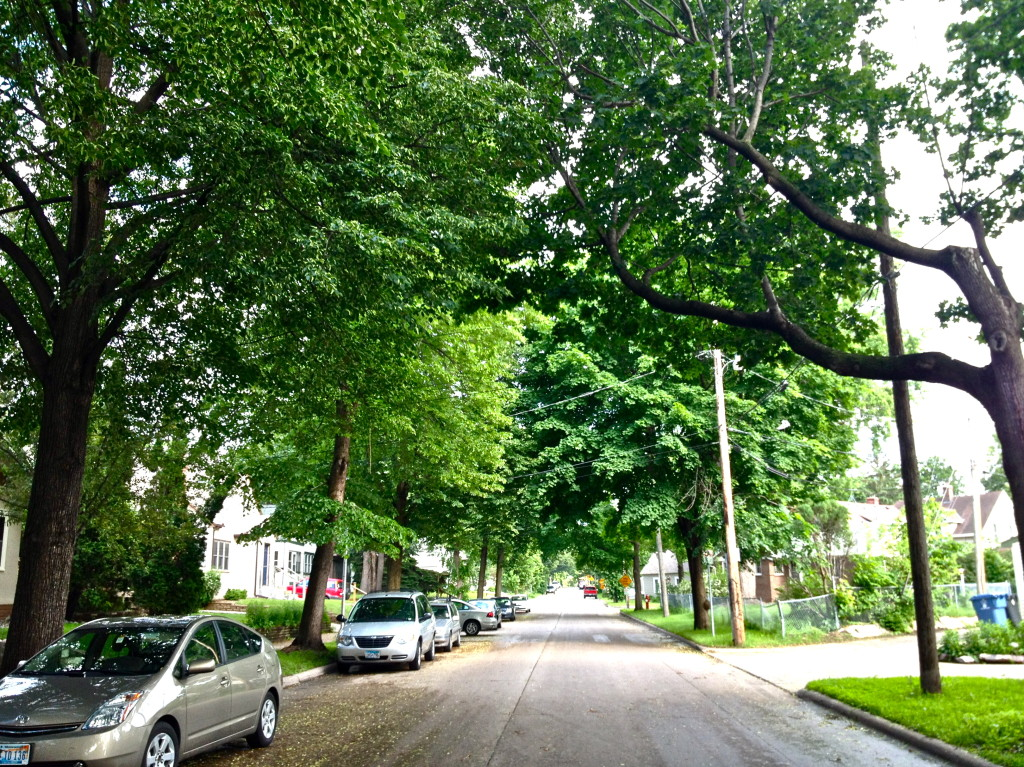 Tree-lined Cole Ave in SE Minneapolis