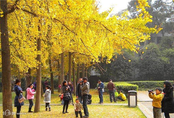Fall street scene in Shanghai