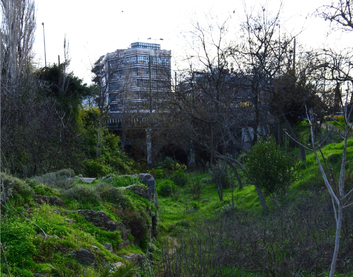Illissos flora, Vathraconisi, Athens, Greece