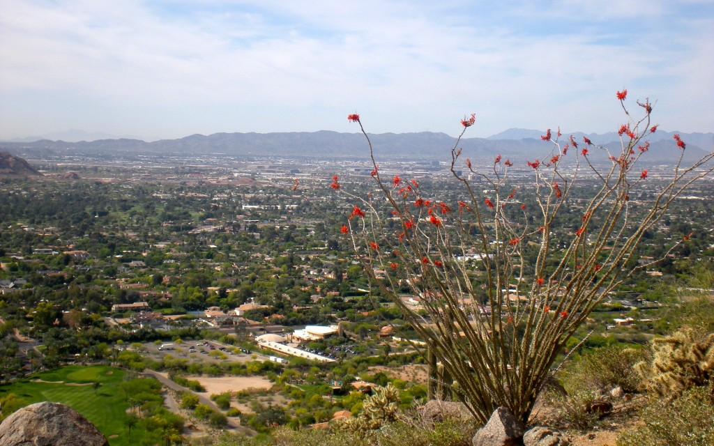 South View of Phoenix from Camelback Mountain, Phoenix, Arizona