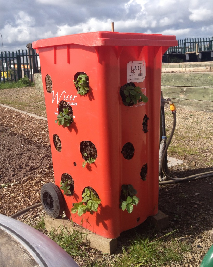 An example of planting in a bin at Knocknaheeny Community Garden, Cork City, Ireland