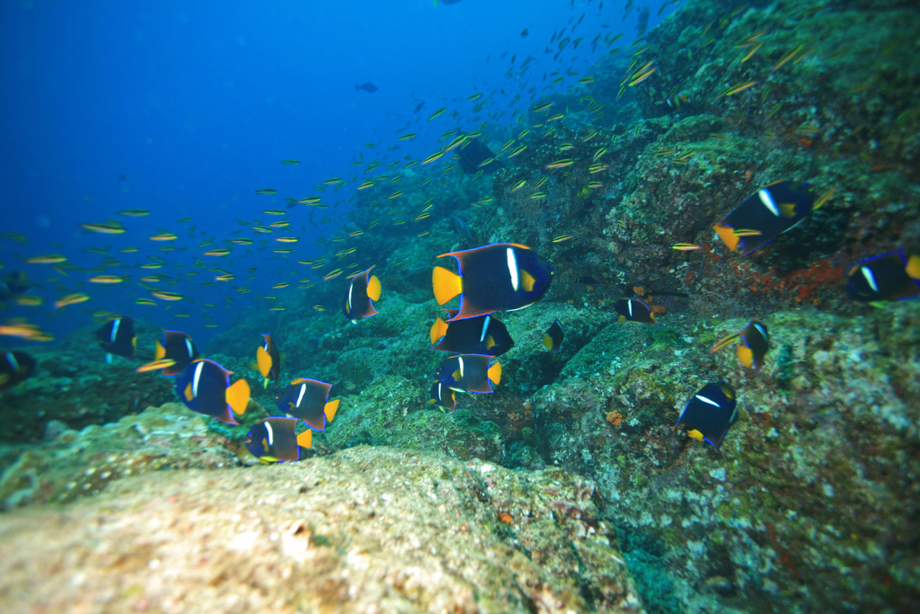 Fishes, Panama