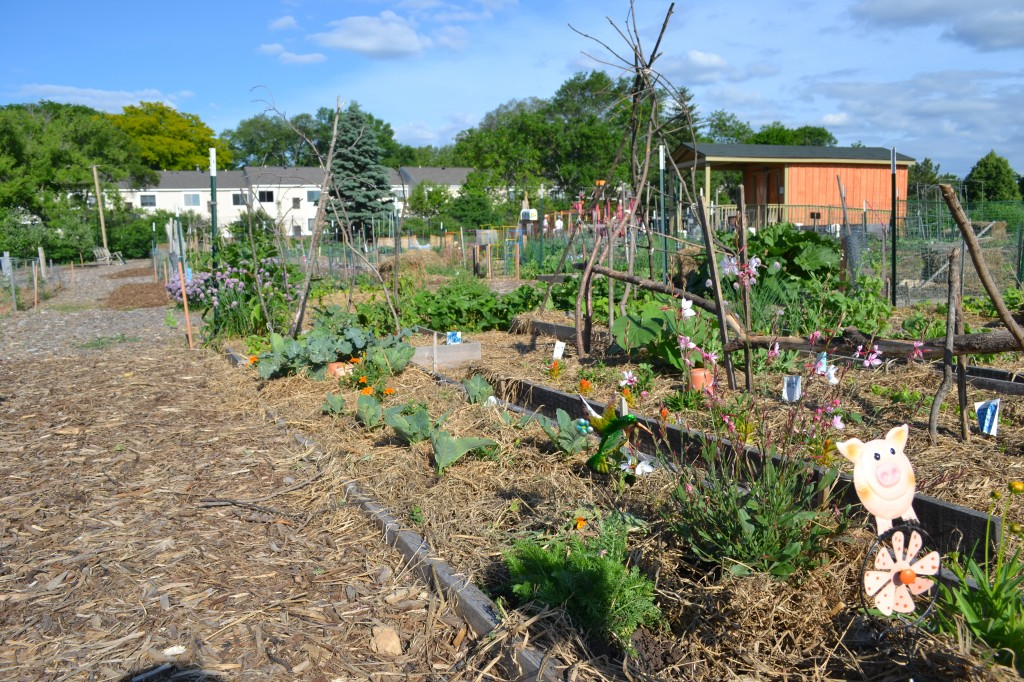 Middleton community garden, Wisonsin