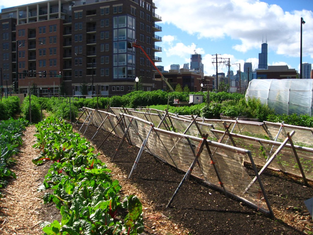 Chicago, Illinois rooftop garden