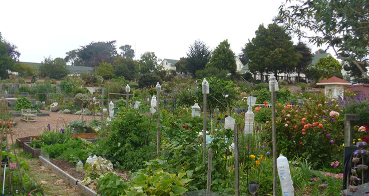 Fort Mason Community Garden, San Francisco