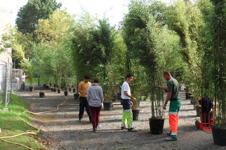 Volunteers setting up bamboo plants in Rennes, France. Credit: La Robinetterie.