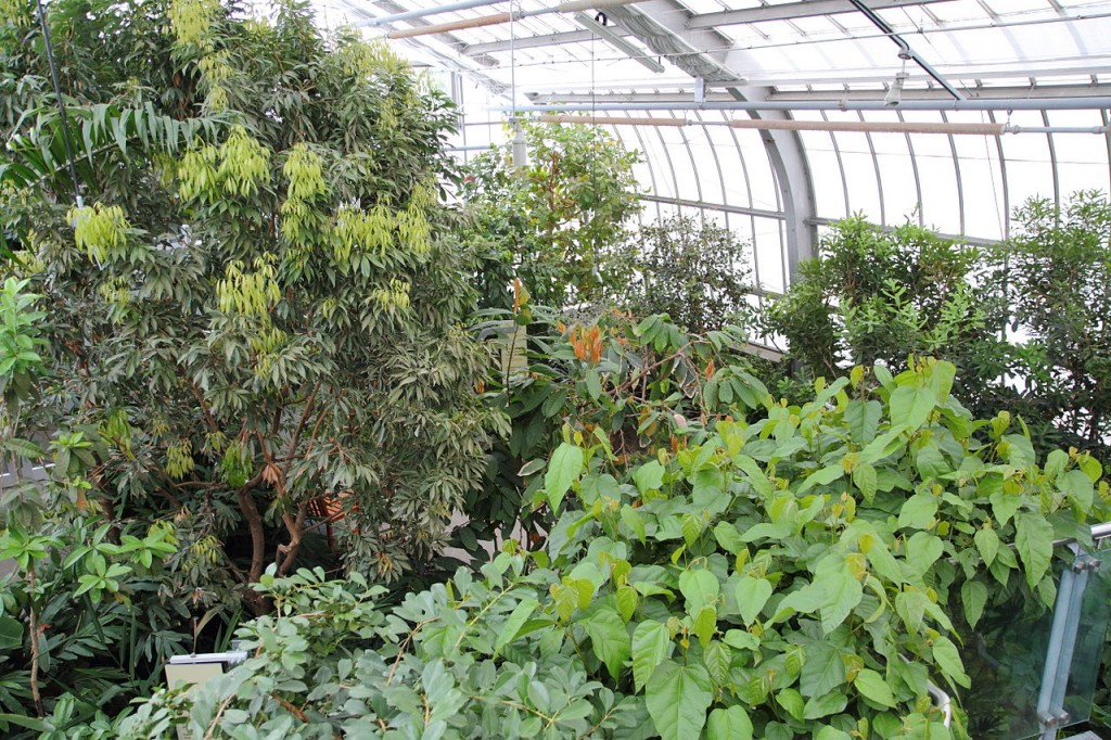 Greenhouse, Quebec, Canada