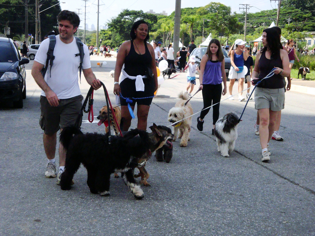 Canine community event in Brazil