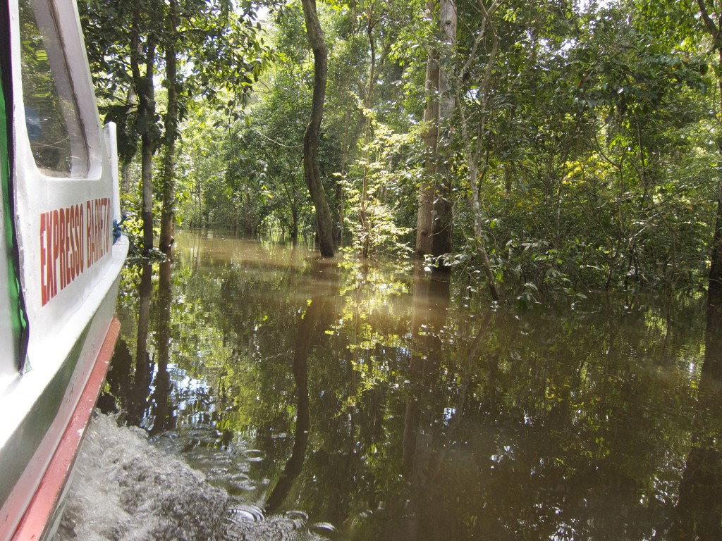 A forest on the flooded Rio Negro, Manaus, Brazil