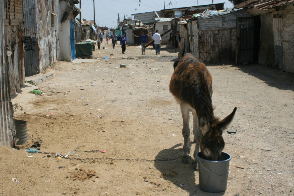 Donkey drinking water in foreground of photo showing shantytown in Casablanca, Morocco
