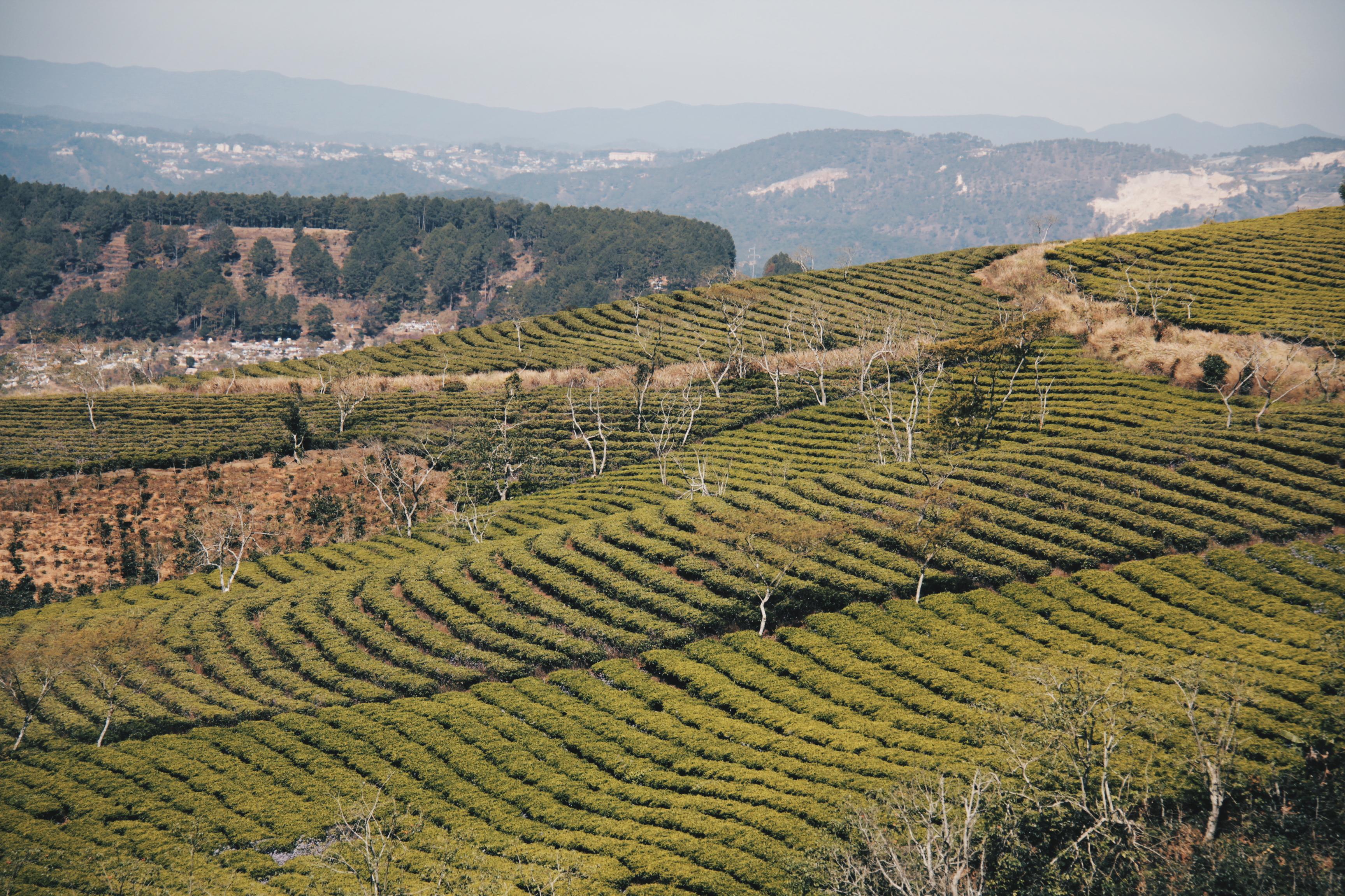 Terraced hillside in Dalat, Vietnam countryside