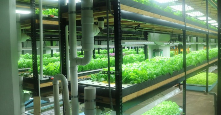 Aquaponics Farming Business Expands in the Twin Cities and Revitalizes Neighborhoods