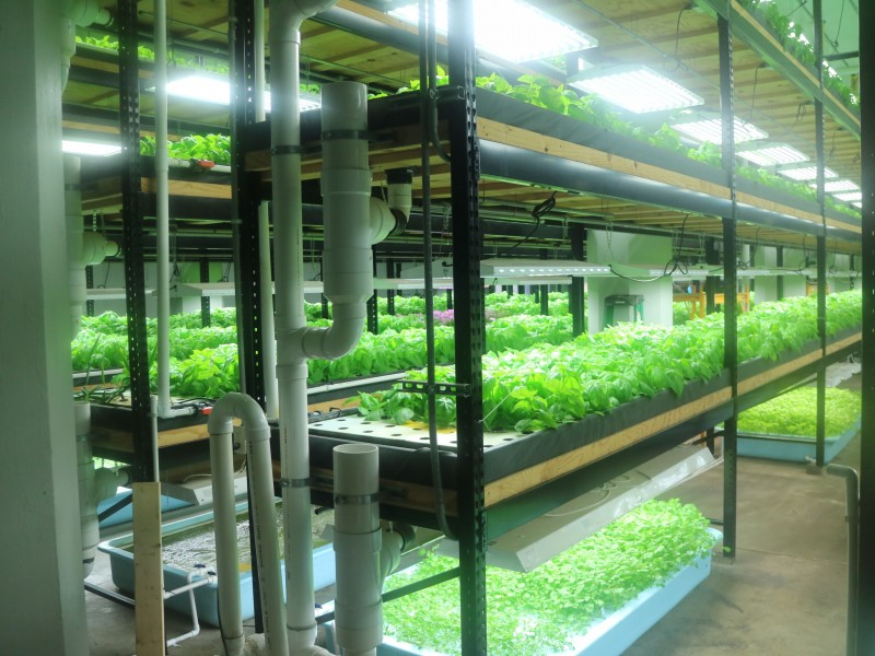 Aquaponics Plants, St. Paul, Minnesota