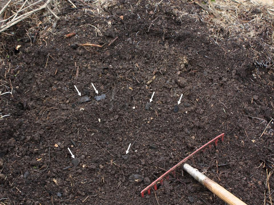 Home made terra preta: wood charcoal composted together with yard waste, kitchen slops and soil. The charcoal pieces do not decay during fermentation and can be found in the compost when it is done (white arrows).