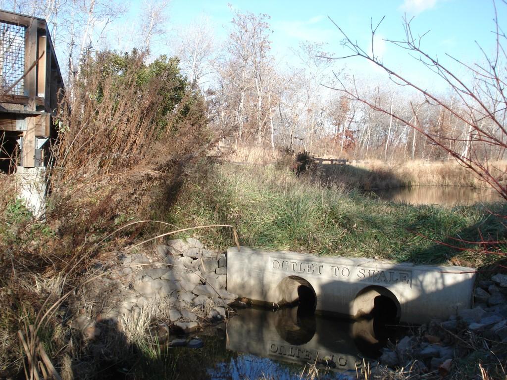 Alewife Wetland Reservation, Cambridge, Massachusetts, USA