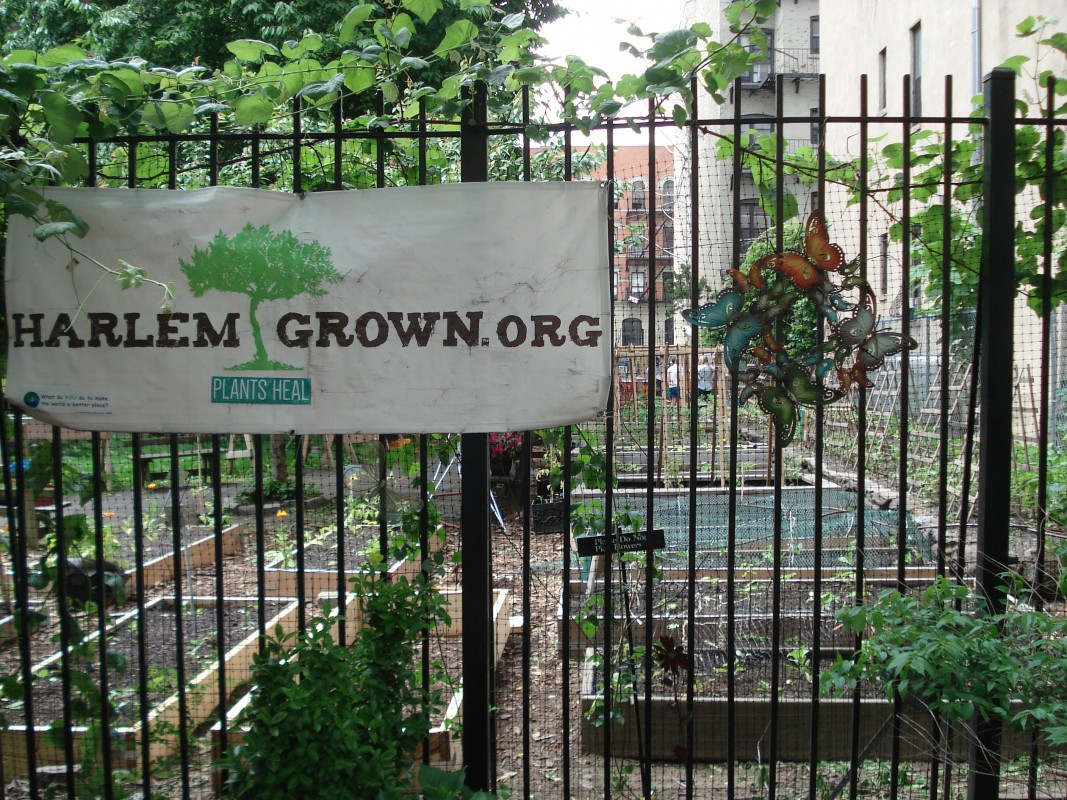 Harlem Grown Farm, Harlem, New York City, New York, USA