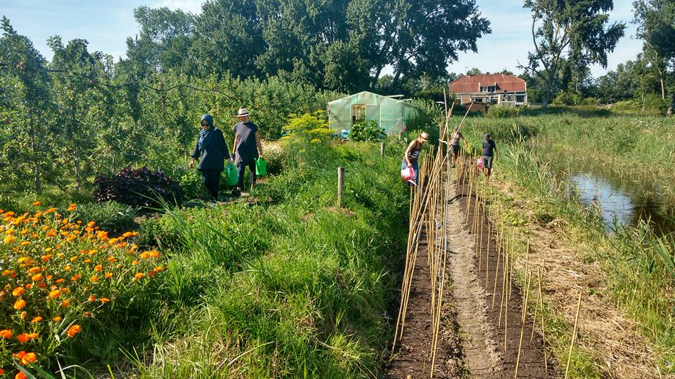 Pluk! Community Support Agriculture, CSA, Amsterdam, the Netherlands