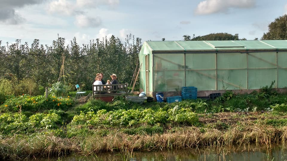 Pluk! Green house, Community Supported Agriculture, CSA, Amsterdam, the Netherlands