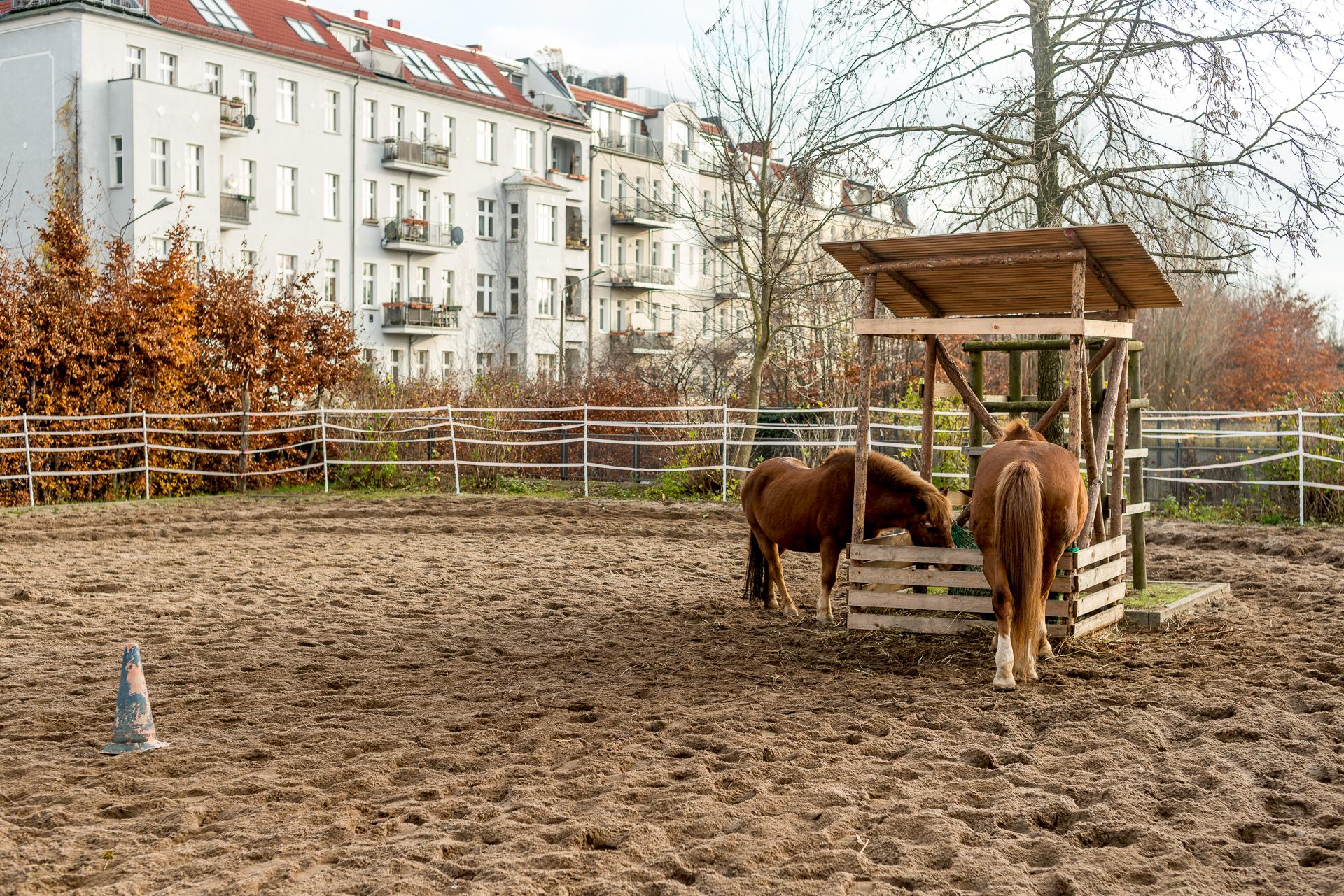 Horses on a children's farm in Prenzlauer Berg, Berlin, Germany