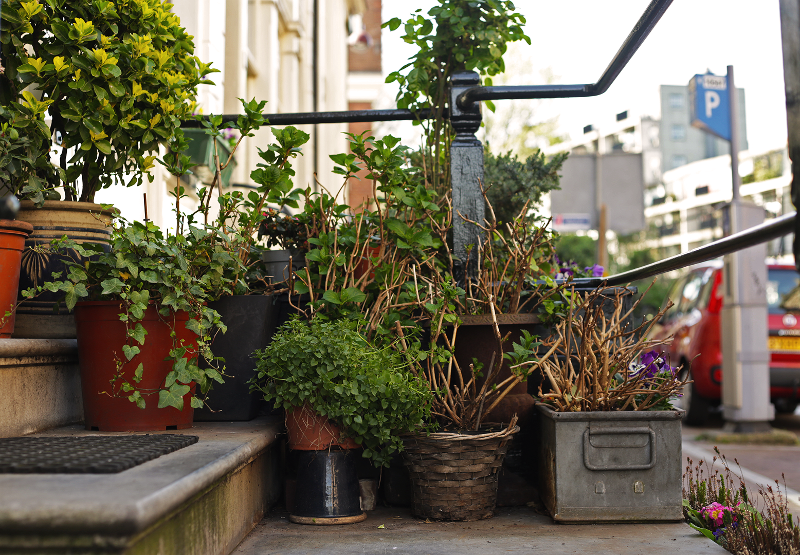 Doorstep planter boxes are a common sight in Amsterdam, adding beauty and nature to the busy city.