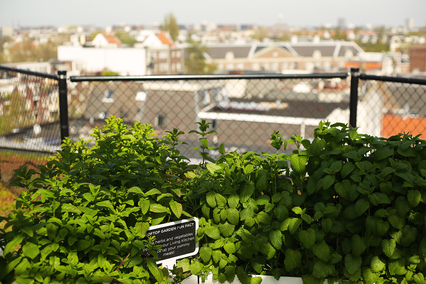 The rooftop garden at Zoku Hotel provides beautiful views and herbs for their kitchen