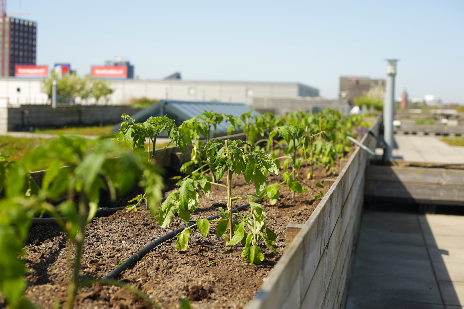 Zuidpark Rooftop Garden is the largest in Europe, nearly an acre of urban agriculture atop a business complex.